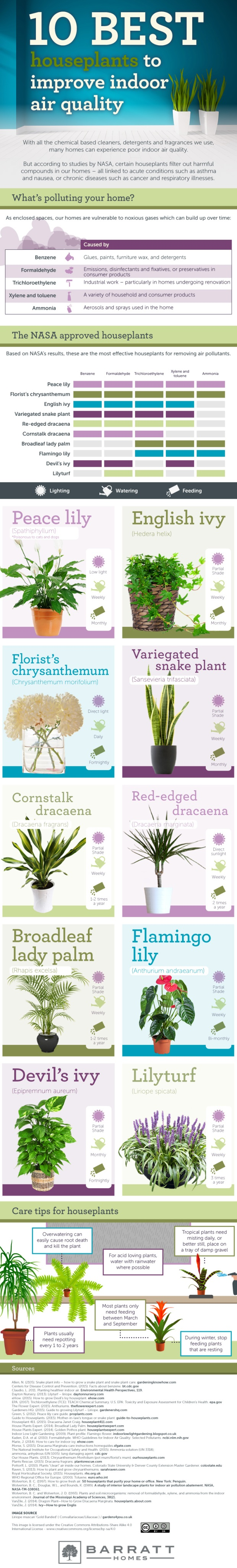 10-best-houseplants-to-improve-indoor-air-quality-V3